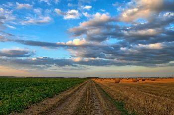 El uso del ozono previene y repara los daños del frío en los cultivos