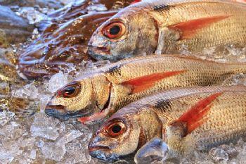Ozono para el tratamiento del pescado