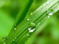 Purificar el aire: eliminar ácaros, el polen y aire contaminado